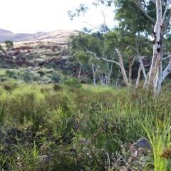 ern1_landscape